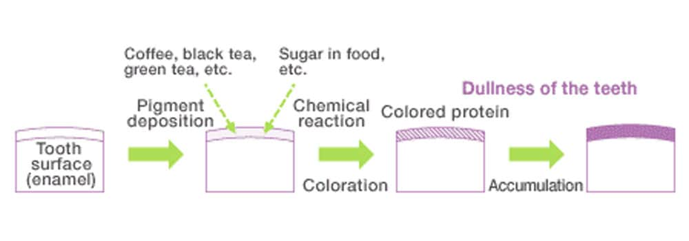 Chart showing how staining occurs